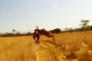 Mountain Biker gets taken out by a buck