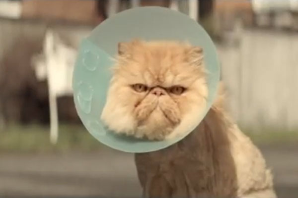 Love-struck cat in new Toyota ad