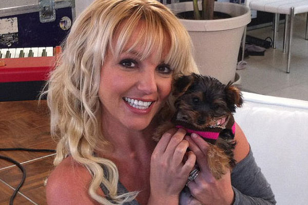 Britney's new puppy is a Twitter star