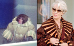 "Miranda Priestly in ""The Devil Wears Prada"""