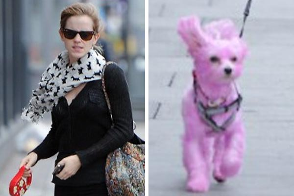 Harry Potter star dyed her dog
