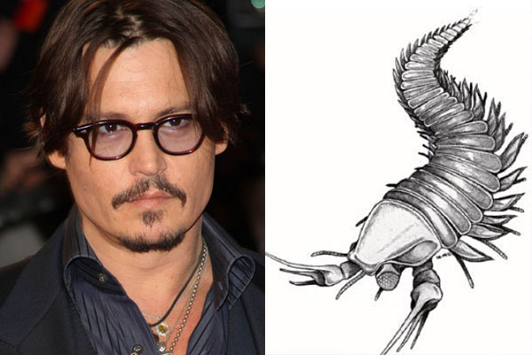 What has been named after Johnny Depp