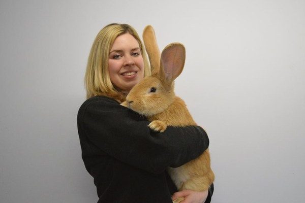 This ADORABLE dog-sized rabbit needs a new home